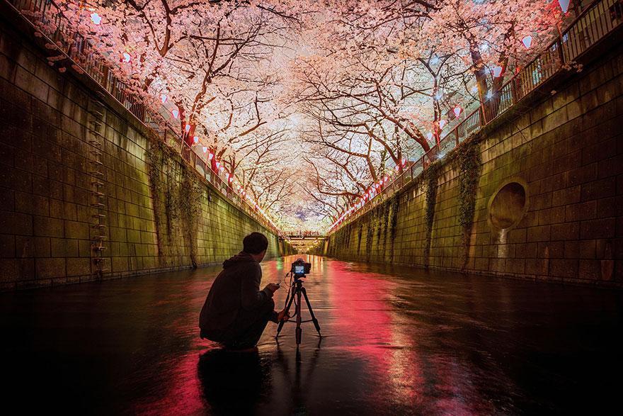 cherry-blossom-sakura-7
