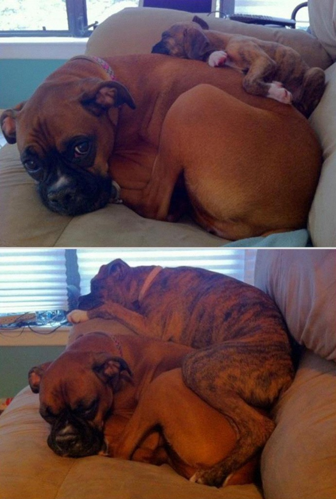 pets-before-after-15