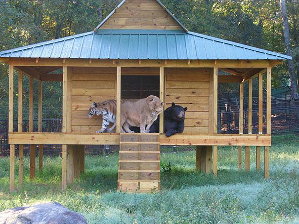 unusual-animal-friendship-11-1
