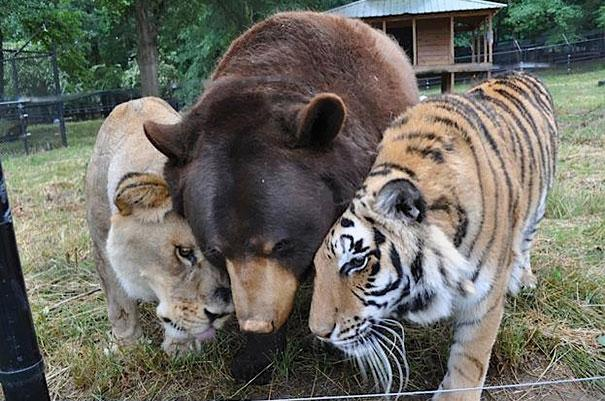unusual-animal-friendship-11-3