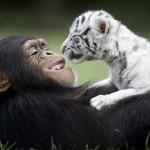 種を超えた愛の証明写真20枚。動物だって負けてない。