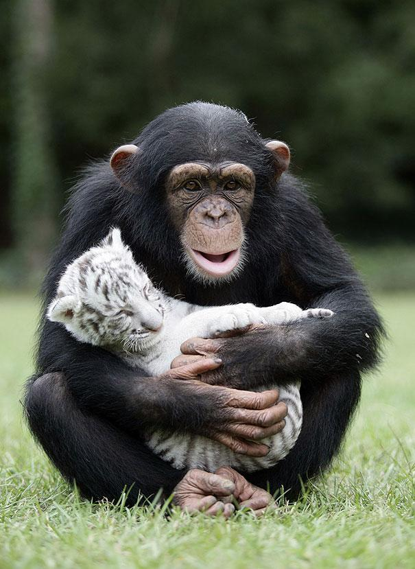 unusual-animal-friendship-15-4