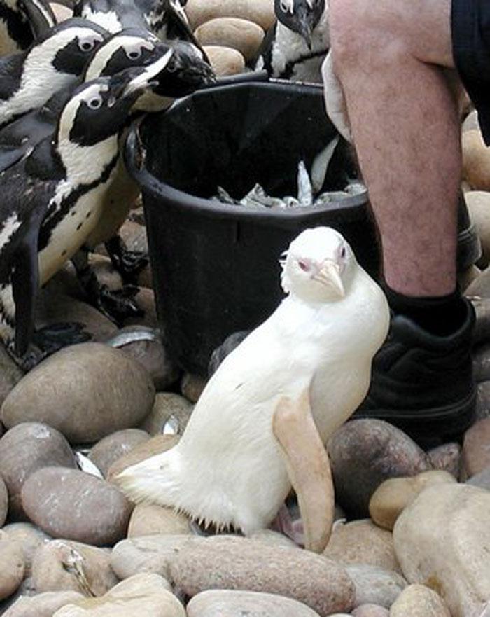 albino_animals_19