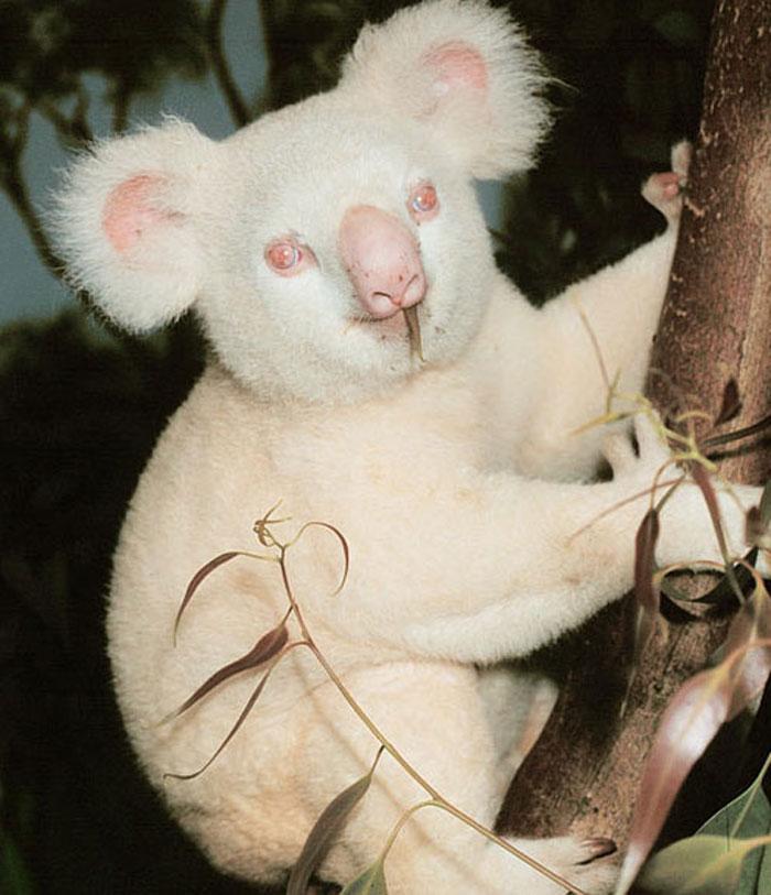 albino_animals_20