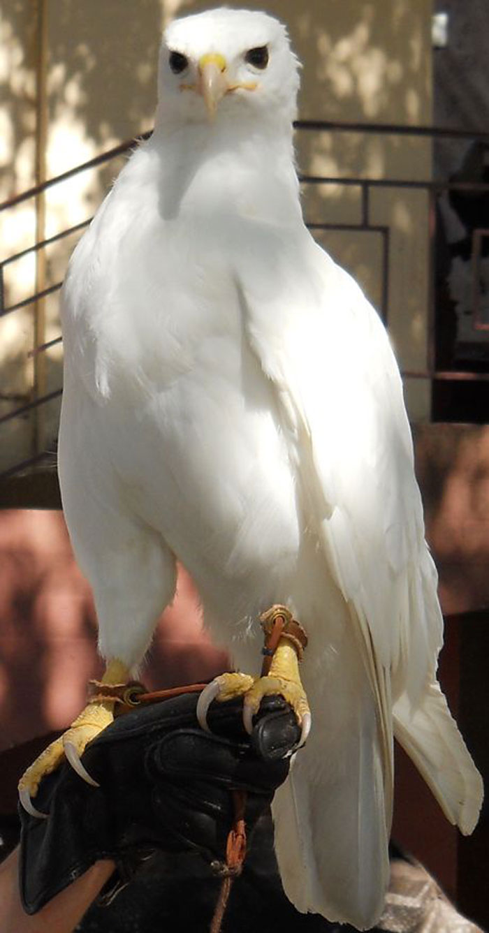 albino_animals_21