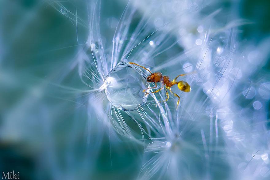 macro-photography-miki-asai-3