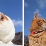 海外で話題になった日本の癒されるお猫様の写真9枚