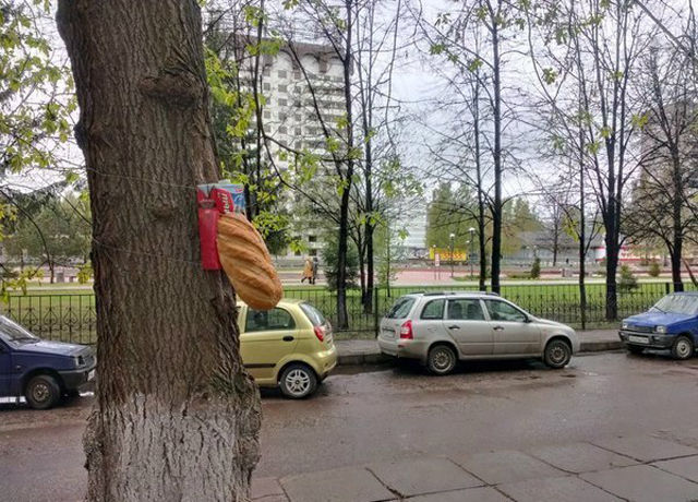 random_stuff_you_will_only_see_in_russia_640_30