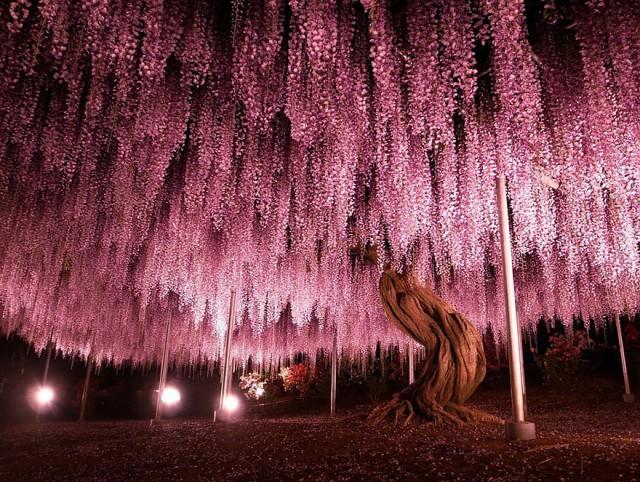 01-Ashikaga-Flower-Park-in-Japan_mini