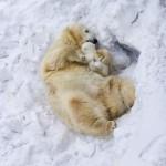 子育てで悩み中なら必見! 疲れが吹き飛ぶ動物親子の写真11枚