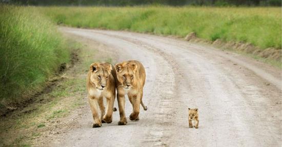 02-animal-parents