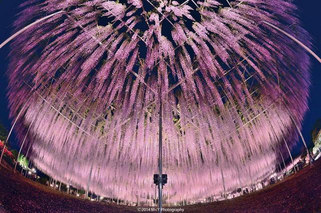 04-Ashikaga-Flower-Park-in-Japan_mini