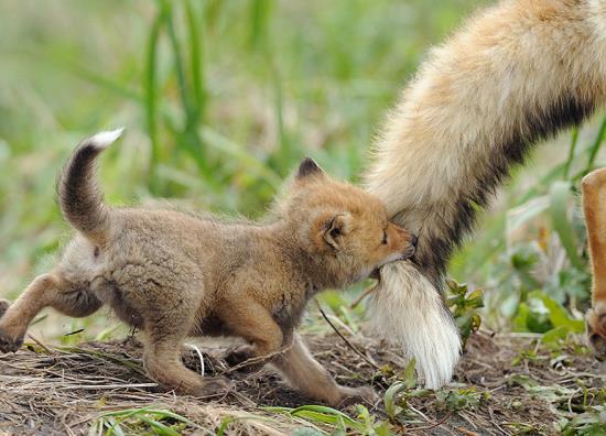 04-animal-parents