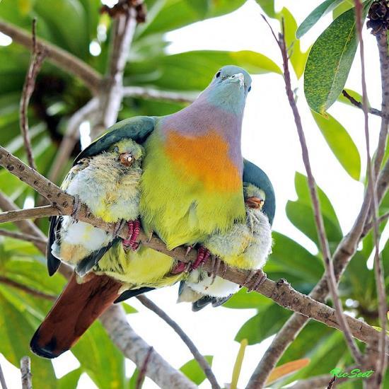05-animal-parents