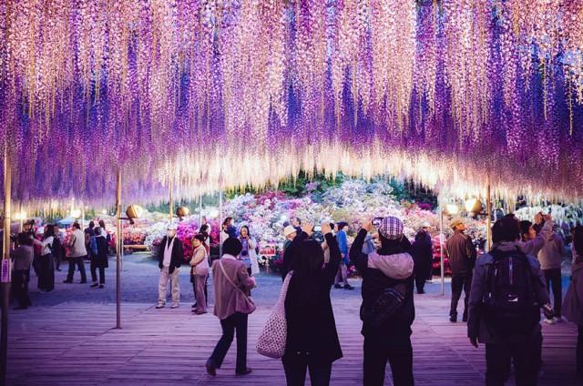 06-Ashikaga-Flower-Park-in-Japan_mini