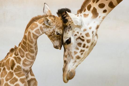 07-animal-parents