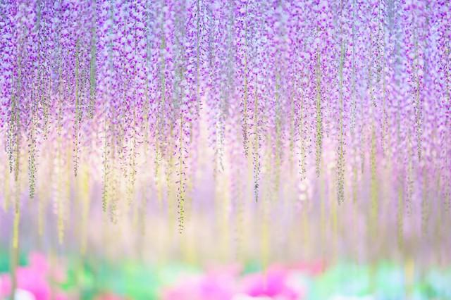 08-Ashikaga-Flower-Park-in-Japan_mini