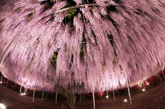 09-Ashikaga-Flower-Park-in-Japan_mini
