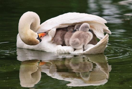 09-animal-parents