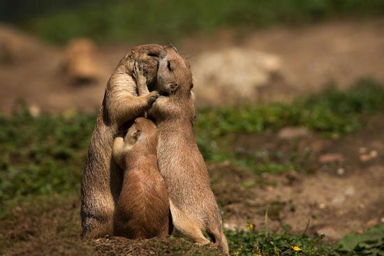 10-animal-parents