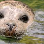【爆笑・癒し】動物たちの笑える GIF動画15選