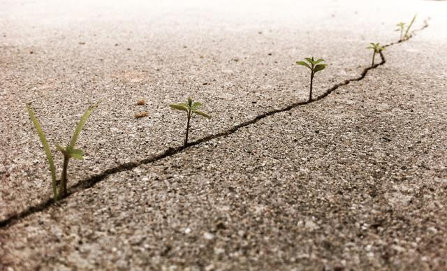 09-the-Plants-Just-Wont-Give-Up