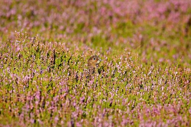 11-The-Hiding-Animals-And-Insects
