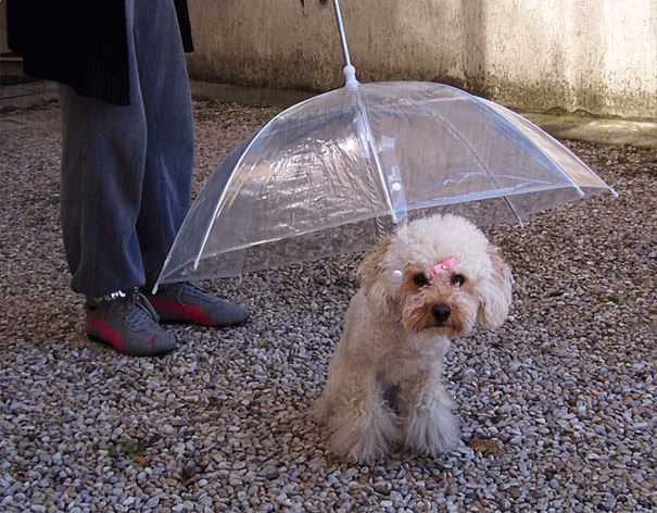 00-Brilliant-Umbrellas