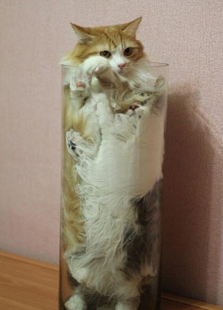 10-probably-didnt-know-about-cats