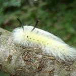 【ギャップ萌え確実】美しい? 不気味? 蝶や蛾の変態ビフォーアフター17選