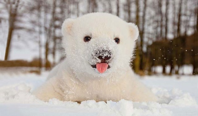 01-animals-playing-in-snow