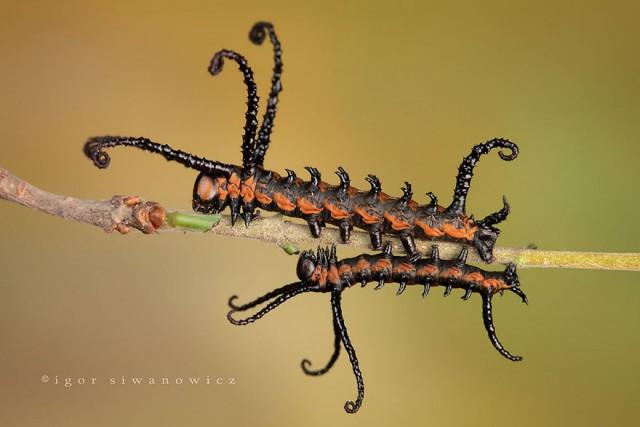 01-caterpillar-moth-butterfly-before-after