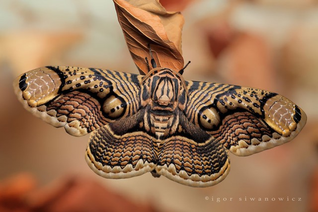 02-caterpillar-moth-butterfly-before-after