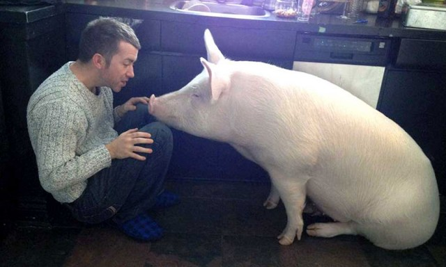 02-mini-pig-grew-up-into-670-pounds