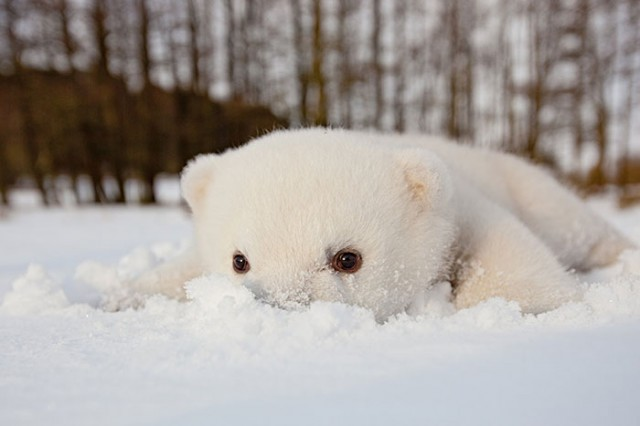 03-animals-playing-in-snow