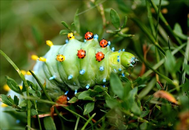 03-caterpillar-moth-butterfly-before-after
