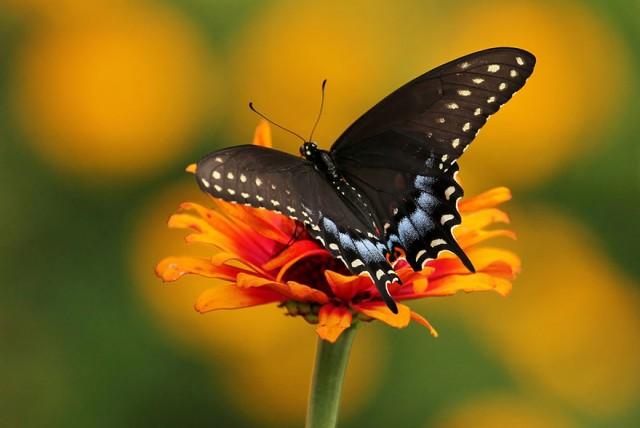 06-caterpillar-moth-butterfly-before-after
