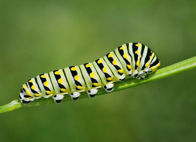 07-caterpillar-moth-butterfly-before-after