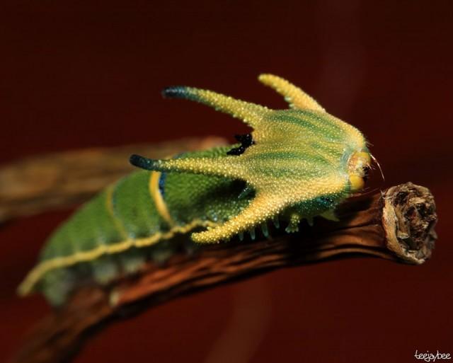 09-caterpillar-moth-butterfly-before-after