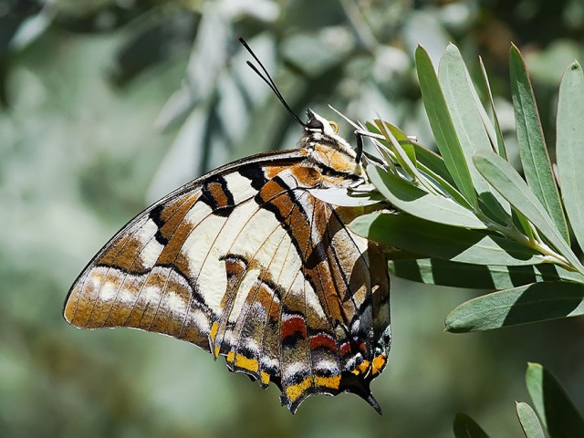 10-caterpillar-moth-butterfly-before-after