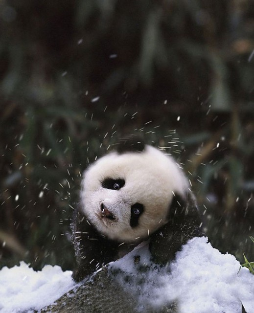 13-animals-playing-in-snow