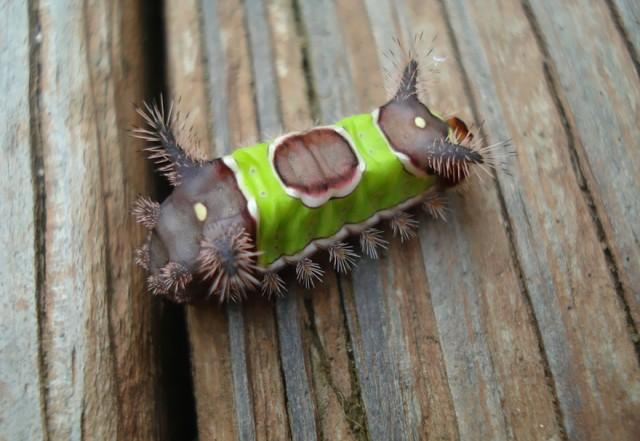 13-caterpillar-moth-butterfly-before-after