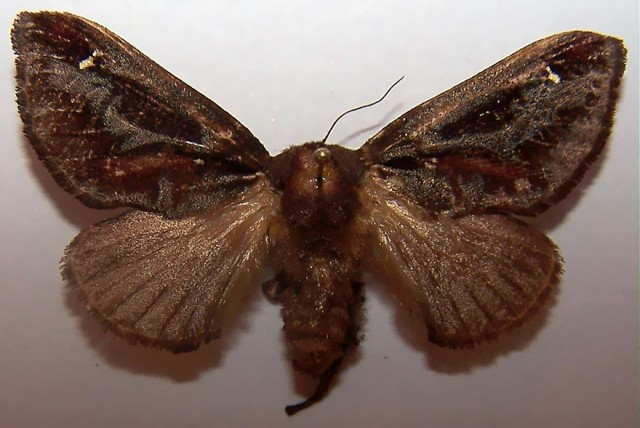 14-caterpillar-moth-butterfly-before-after