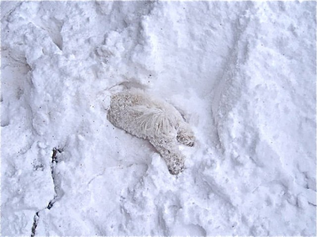 17-animals-playing-in-snow