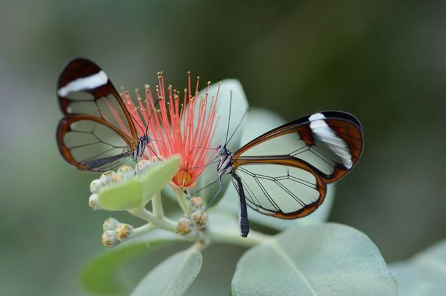 18-caterpillar-moth-butterfly-before-after