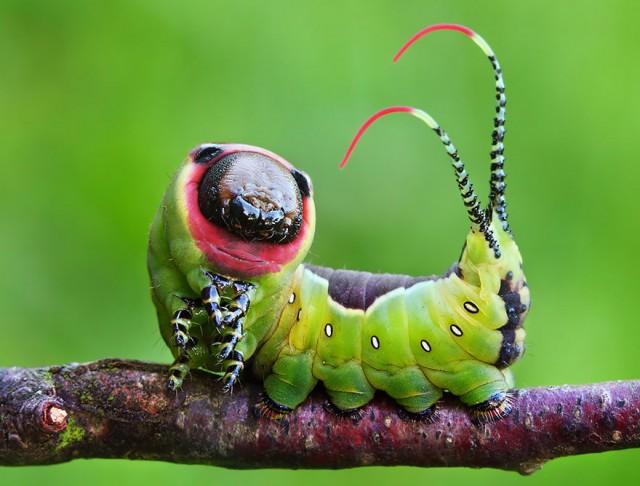 19-caterpillar-moth-butterfly-before-after