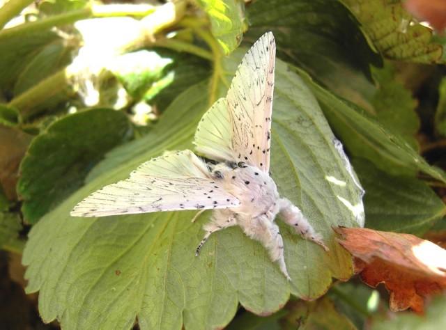 20-caterpillar-moth-butterfly-before-after