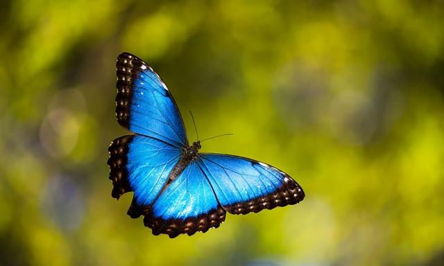 24-caterpillar-moth-butterfly-before-after