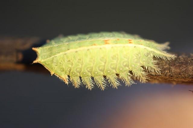 27-caterpillar-moth-butterfly-before-after