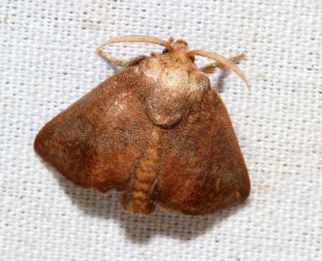 28-caterpillar-moth-butterfly-before-after
